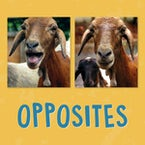 Opposites (English)