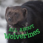 All about Wolverines (English)