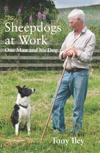 Sheepdogs at Work