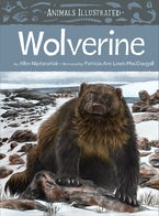 Animals Illustrated: Wolverine
