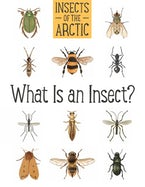 Insects of the Arctic: What Is an Insect?