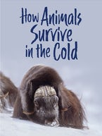 How Animals Survive in the Cold (English)